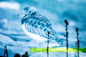 Konzert im Thalia Theater 27.01.2020 in Hamburg